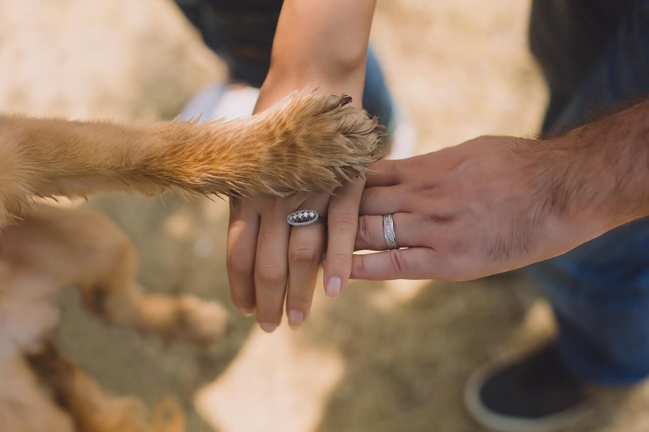 Gryzaki naturalne dla psów, jakie warto wybierać?